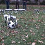 Cheetha Like Robots Flip and Play Soccer